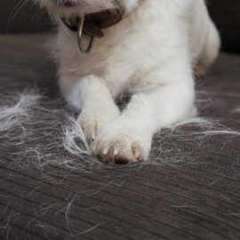 KEEPING PET HAIR UNDER CONTROL
